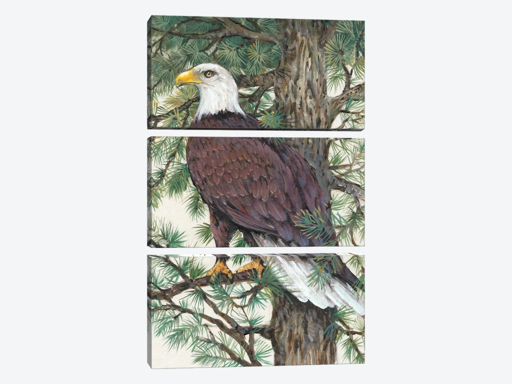 Eagle In The Pine by Tim OToole 3-piece Canvas Wall Art