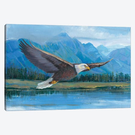 Eagle Soaring Canvas Print #TOT30} by Tim OToole Canvas Art