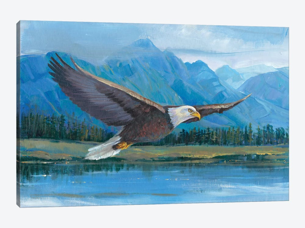 Eagle Soaring by Tim OToole 1-piece Canvas Artwork