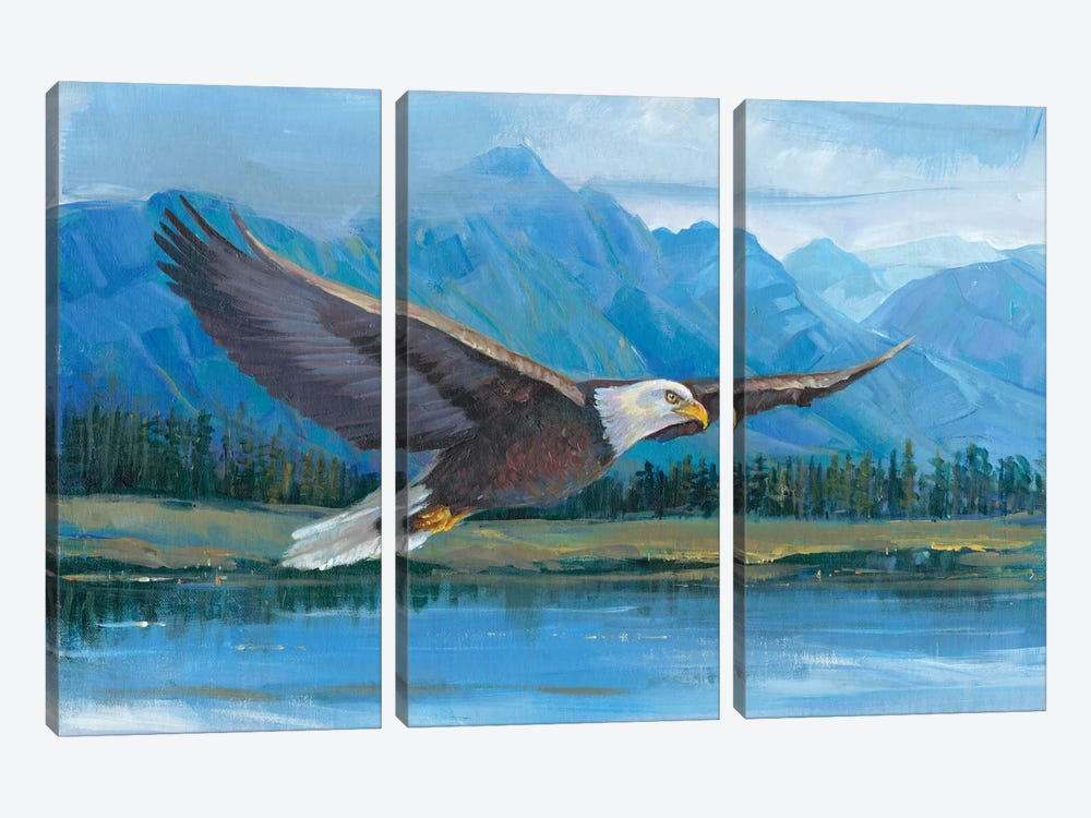 Eagle Soaring by Tim OToole 3-piece Canvas Wall Art