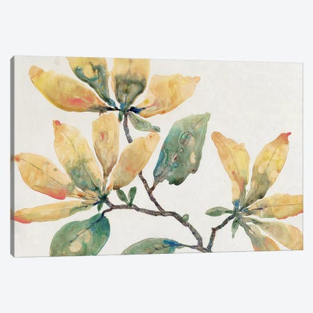 Flowering Branch II Canvas Print #TOT321} by Tim O'Toole Canvas Artwork