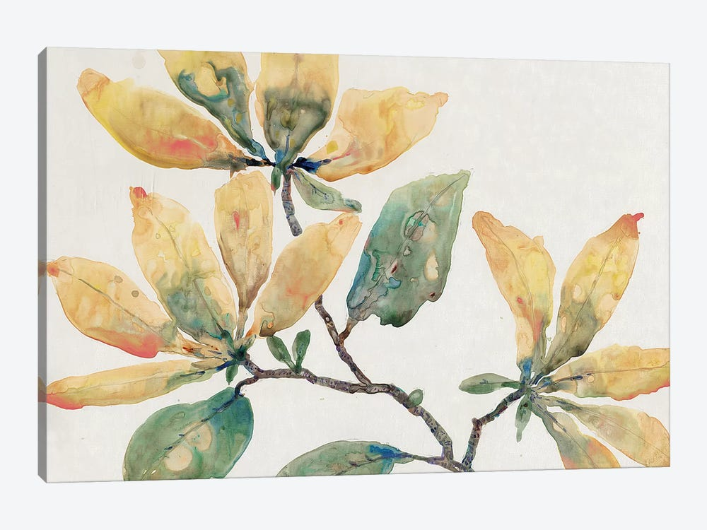Flowering Branch II by Tim O'Toole 1-piece Canvas Artwork
