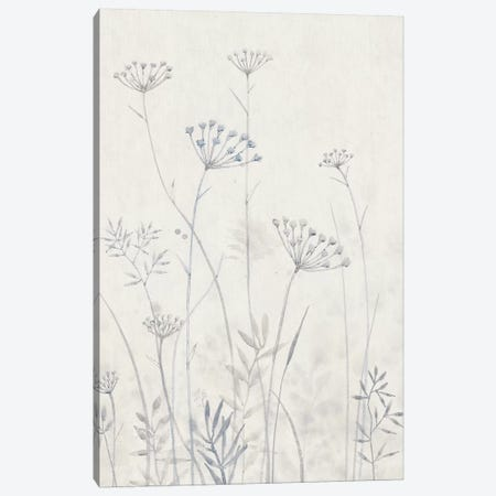 Neutral Queen Anne's Lace I Canvas Print #TOT336} by Tim OToole Canvas Wall Art