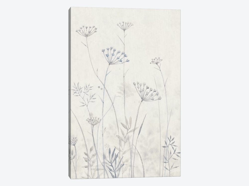Neutral Queen Anne's Lace I by Tim OToole 1-piece Canvas Artwork