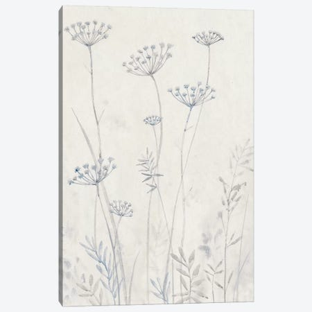 Neutral Queen Anne's Lace II Canvas Print #TOT337} by Tim OToole Canvas Artwork