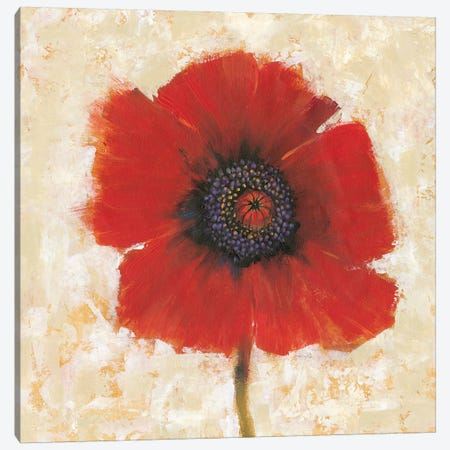 Red Poppy Portrait II Canvas Print #TOT345} by Tim OToole Art Print