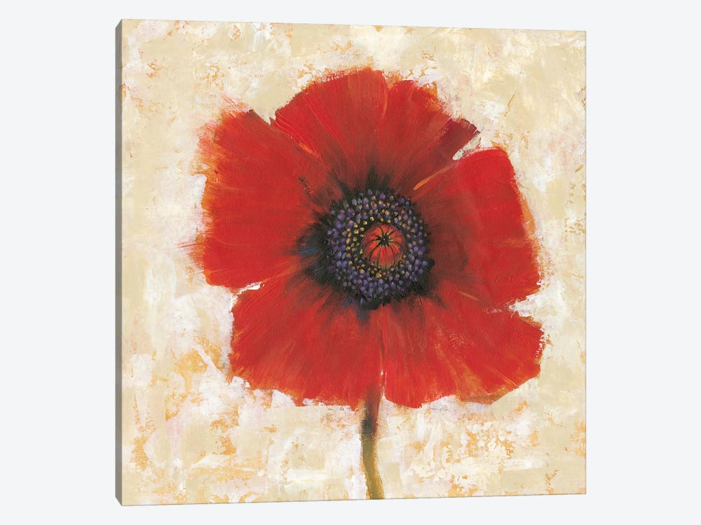 Red Poppy Portrait II by Tim OToole 1-piece Canvas Wall Art