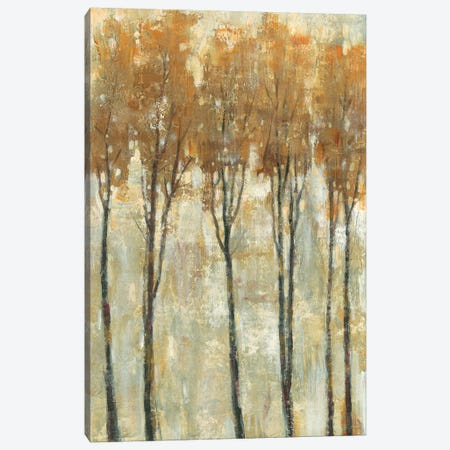 Standing Tall In Autumn I Canvas Print #TOT350} by Tim OToole Art Print