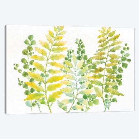 Mixed Greenery I Canvas Print #TOT382} by Tim OToole Canvas Wall Art