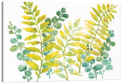 Mixed Greenery II Canvas Art Print