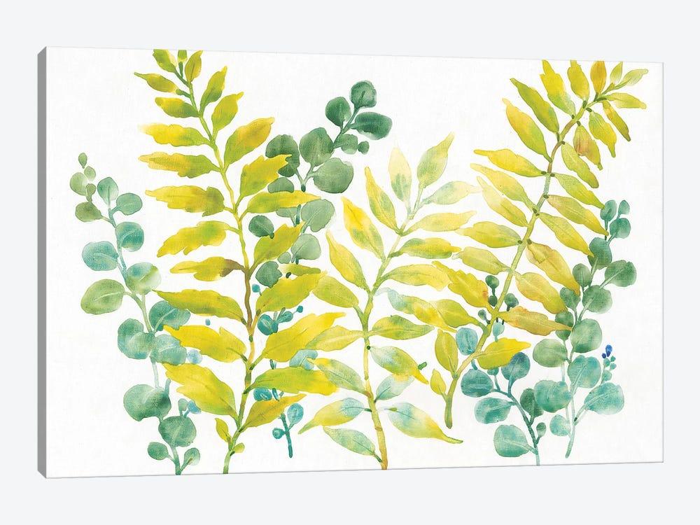 Mixed Greenery II by Tim OToole 1-piece Canvas Wall Art