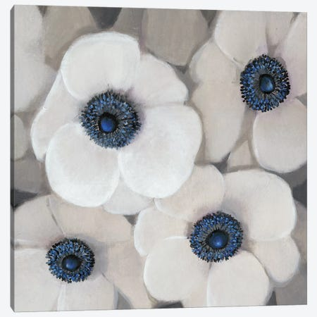 White Anemone II Canvas Print #TOT409} by Tim O'Toole Canvas Print