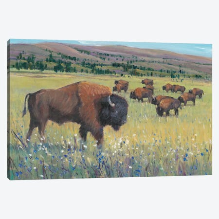Animals of the West I Canvas Print #TOT412} by Tim OToole Canvas Artwork