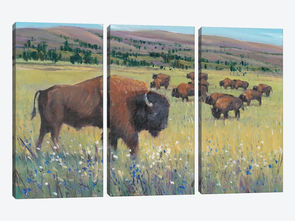 Animals of the West I by Tim OToole 3-piece Canvas Art Print