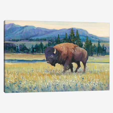 Animals of the West II Canvas Print #TOT413} by Tim OToole Canvas Art