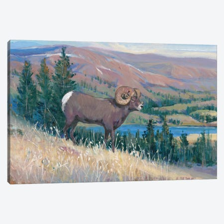 Animals of the West III 3-Piece Canvas #TOT414} by Tim OToole Canvas Art Print