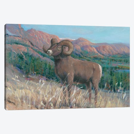 Animals of the West IV Canvas Print #TOT415} by Tim OToole Art Print