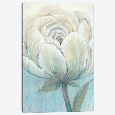 English Rose I Canvas Print #TOT424} by Tim OToole Canvas Art