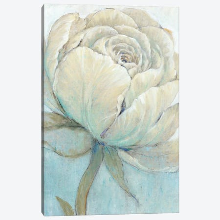 English Rose II Canvas Print #TOT425} by Tim OToole Canvas Wall Art