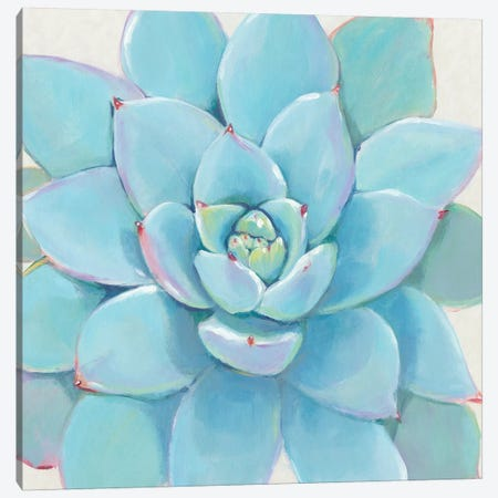 Pastel Succulent I Canvas Print #TOT432} by Tim OToole Canvas Art
