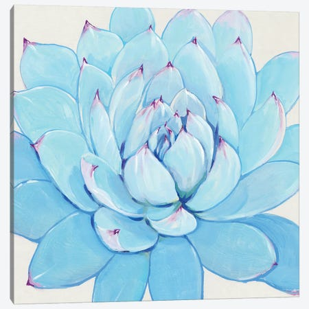 Pastel Succulent II Canvas Print #TOT433} by Tim OToole Canvas Art