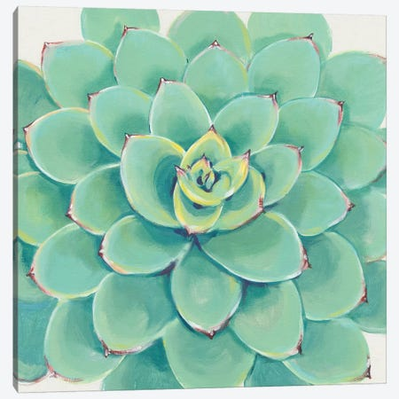 Pastel Succulent III Canvas Print #TOT434} by Tim OToole Canvas Print