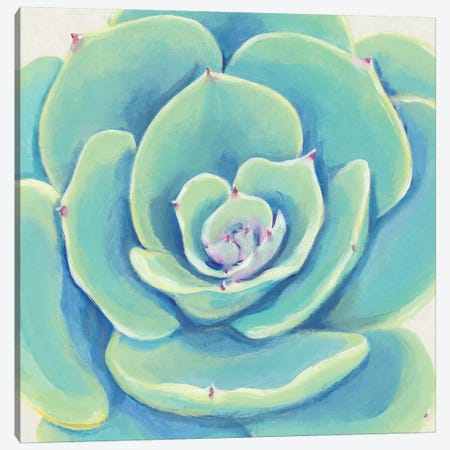 Pastel Succulent IV Canvas Print #TOT435} by Tim OToole Canvas Print