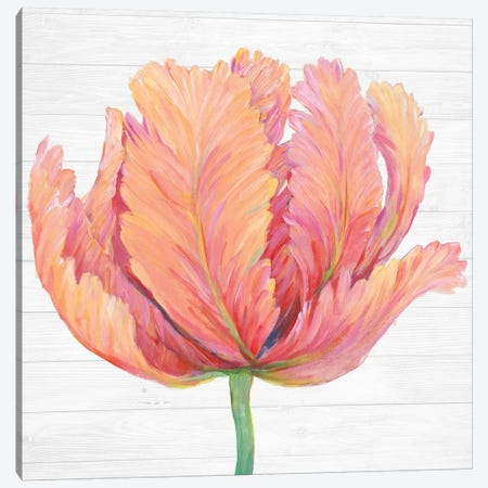 Single Pink Bloom I Canvas Print #TOT436} by Tim OToole Canvas Print