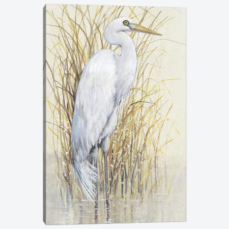 Wading I Canvas Print #TOT442} by Tim OToole Canvas Print