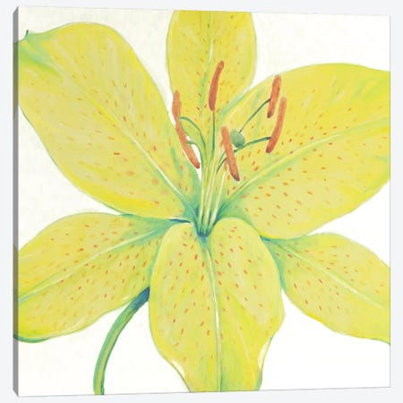 Citron Tiger Lily I Canvas Print #TOT452} by Tim OToole Canvas Wall Art