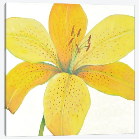 Citron Tiger Lily II 3-Piece Canvas #TOT453} by Tim OToole Canvas Art