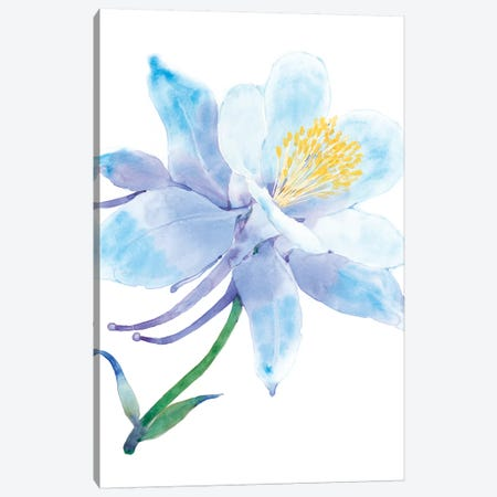 Columbine Bloom I Canvas Print #TOT454} by Tim OToole Art Print