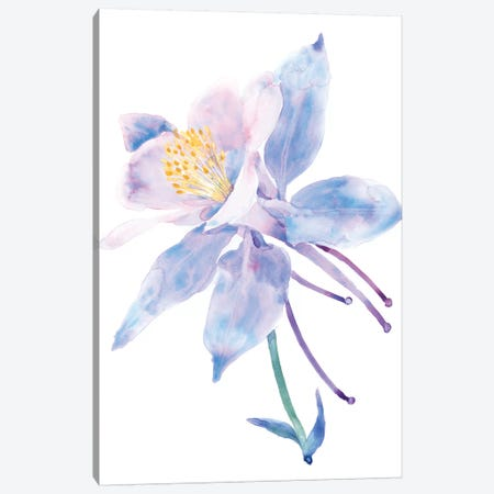 Columbine Bloom II 3-Piece Canvas #TOT455} by Tim OToole Canvas Art Print