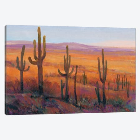 Desert Light I Canvas Print #TOT458} by Tim OToole Canvas Artwork