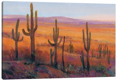 Desert Light I Canvas Art Print