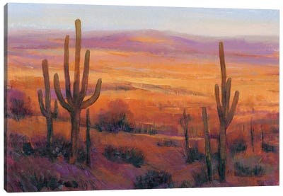 Desert Light II Canvas Art Print
