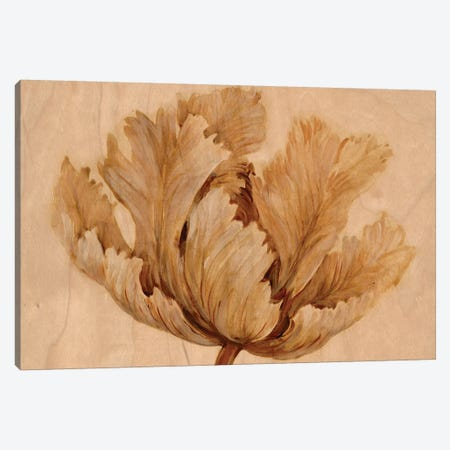 Sepia Tulip on Birch I 3-Piece Canvas #TOT472} by Tim OToole Canvas Wall Art