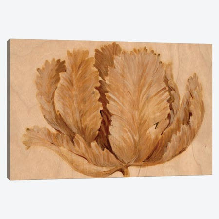 Sepia Tulip on Birch II 3-Piece Canvas #TOT473} by Tim OToole Canvas Artwork