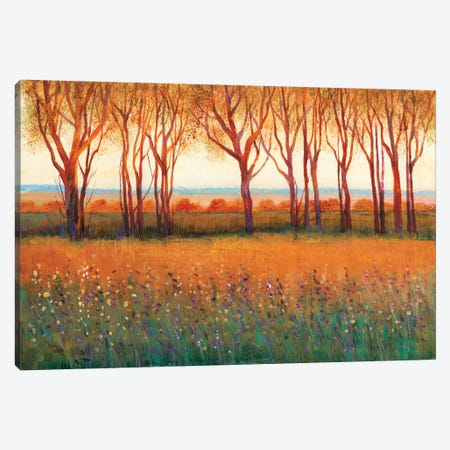Glow in the Afternoon I Canvas Print #TOT490} by Tim OToole Canvas Artwork