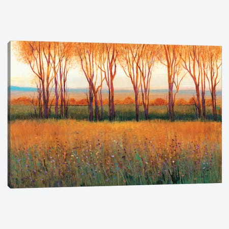 Glow in the Afternoon II Canvas Print #TOT491} by Tim OToole Canvas Wall Art