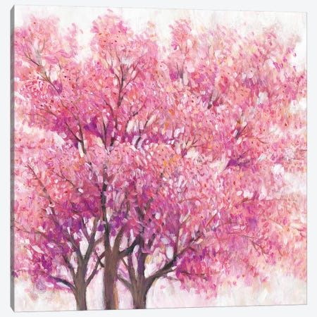 Pink Cherry Blossom Tree I Canvas Print #TOT500} by Tim OToole Canvas Artwork