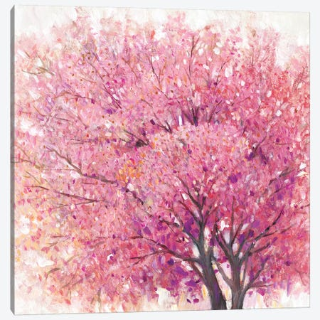 Pink Cherry Blossom Tree II Canvas Print #TOT501} by Tim OToole Canvas Artwork