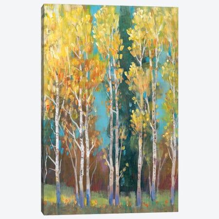Aspen Grove I Canvas Print #TOT520} by Tim OToole Canvas Art