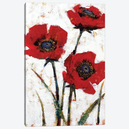 Red Poppy Fresco II Canvas Print #TOT572} by Tim OToole Canvas Print