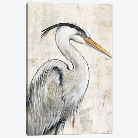 Grey Heron I Canvas Print #TOT585} by Tim OToole Canvas Art Print