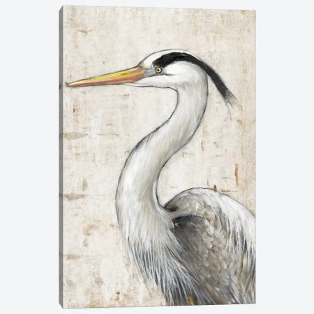 Grey Heron II Canvas Print #TOT586} by Tim OToole Canvas Art Print