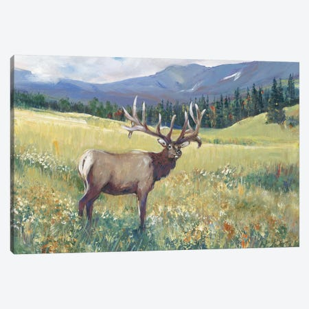 Rocky Mountain Elk I Canvas Print #TOT599} by Tim OToole Canvas Print
