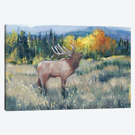 Rocky Mountain Elk II Canvas Print #TOT600} by Tim OToole Canvas Print
