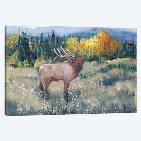 Rocky Mountain Elk II Canvas Print #TOT600} by Tim OToole Canvas Print