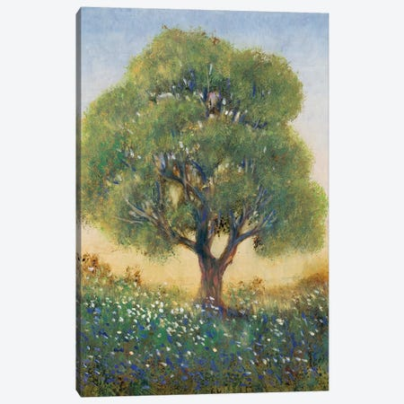Standing in the Field I Canvas Print #TOT625} by Tim OToole Canvas Wall Art